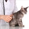 Ветеринарные клиники в Дровяной